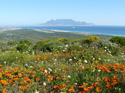 Rare Fynbos gets new range