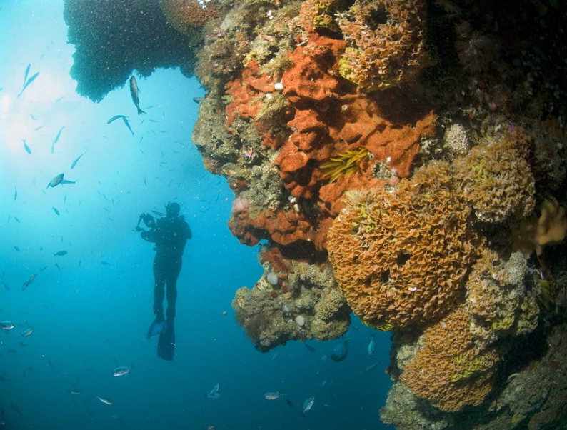 Divers help map SA reefs in conservation project