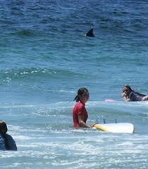 Shark Spotters keen to set up in Koel Bay